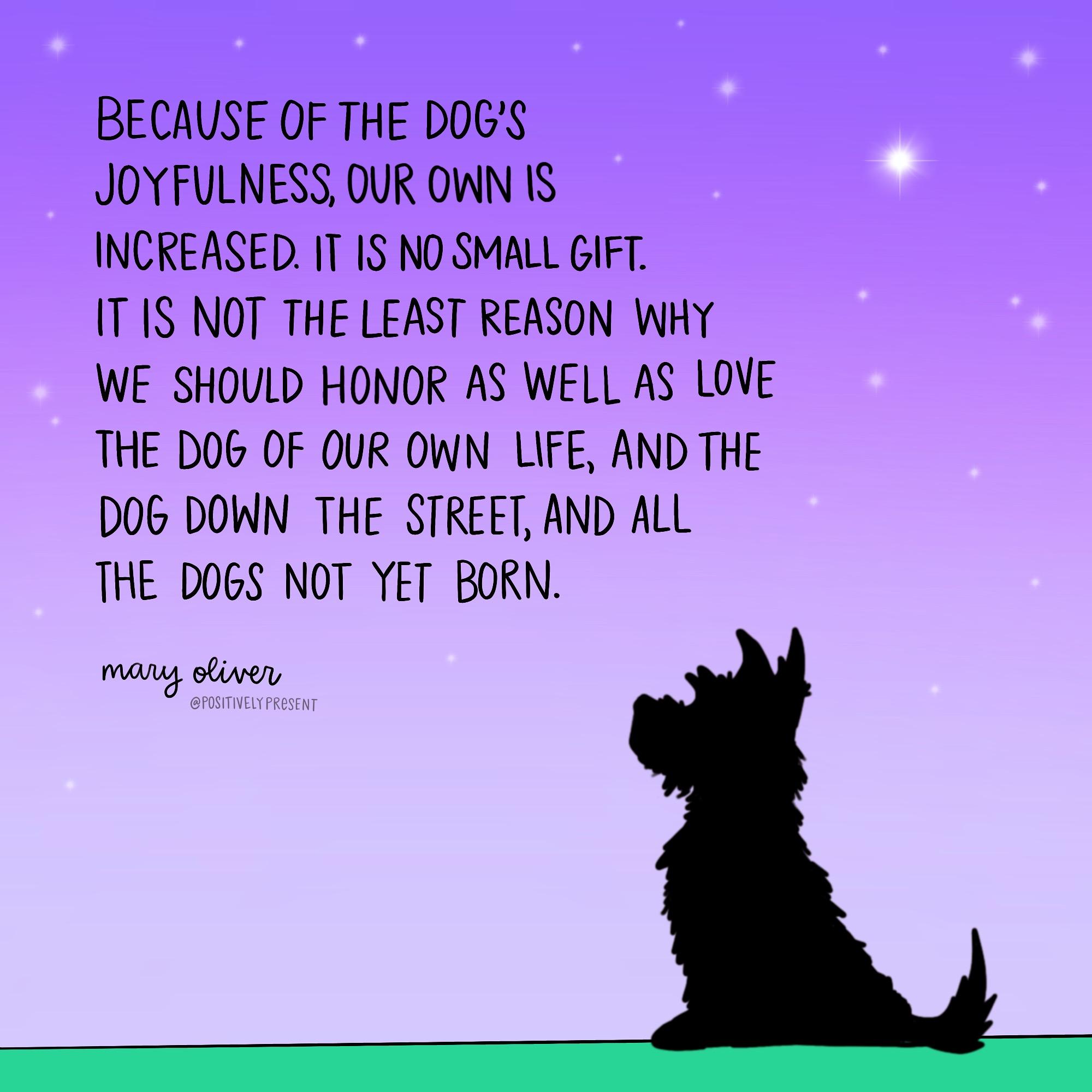 positively present dog